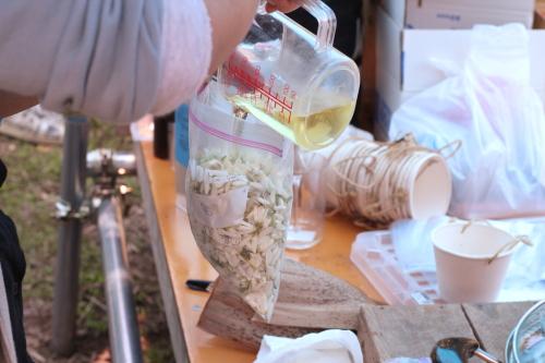 みかんの花にオリーブオイルを入れる