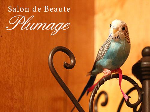 plumage_01