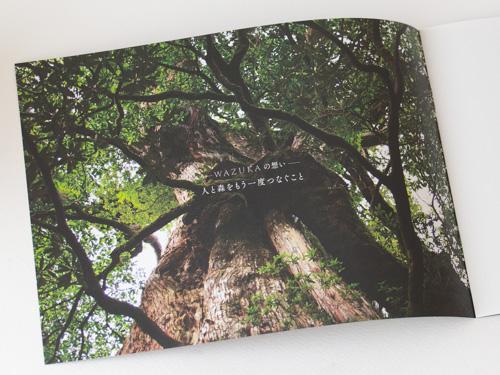 wazuka屋久島の森を守る